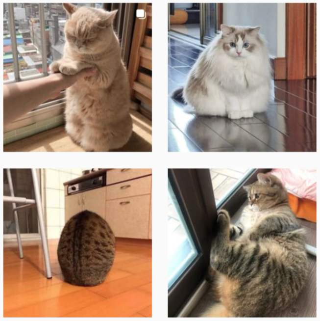 4 obese cats